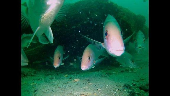 fish-forest.jpg