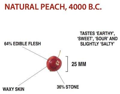 wild-peach.jpg