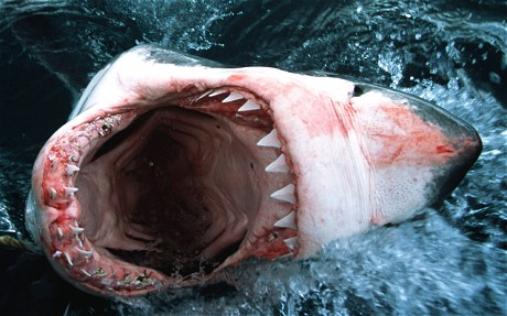 shark-teeth_2622782c.jpg