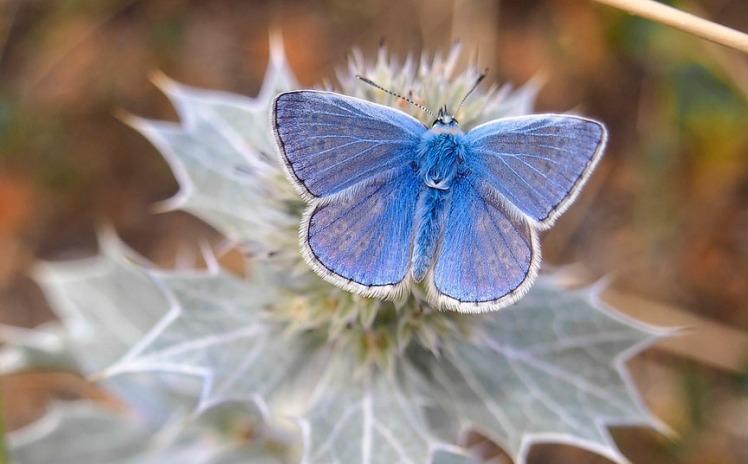 blue-butterfly-two-column.jpg
