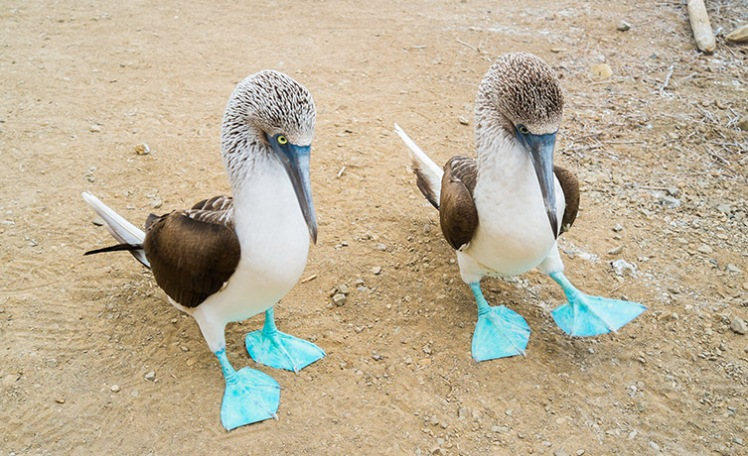 blue-footed-booby-two-column.jpg